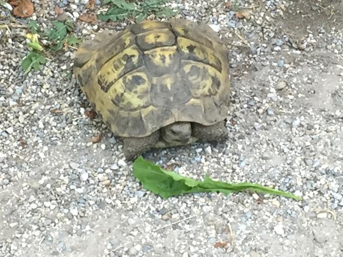 Schildkröte zum Abschluss!